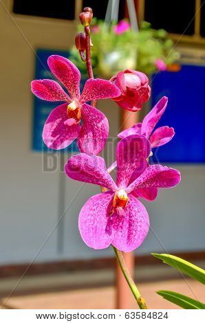 A Stem Of Purple Colored Orchids In A Green Outdoor Park