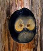 The wooden owl which are looking out of a hollow in a tree. poster