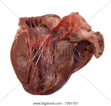 Section throug swine heart
