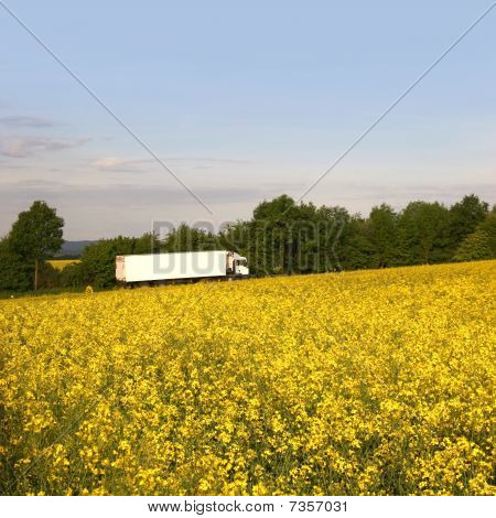 White truck behind a bright rape field