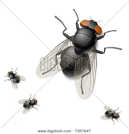 Housefly. Detailed vector illustration.