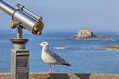 Sea bird sitting on parapet near of tourist telescope on the background of the fort in the sea poster