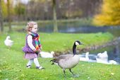 Cute Toddler Girl Chasing Wild Geese At A Lake In An Autumn Park poster
