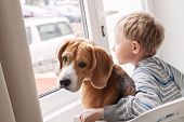 Little boy with his doggy friend waiting together near the window poster