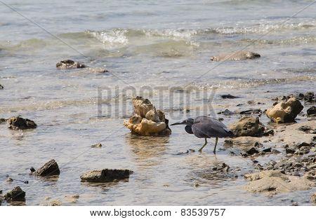 Sea Bird Hunting