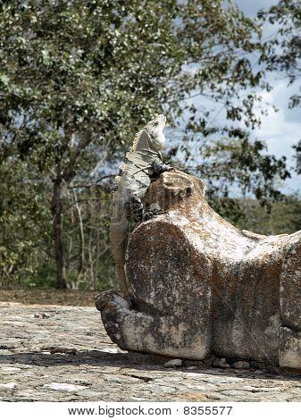 Iguana Of Uxmal, Mexico