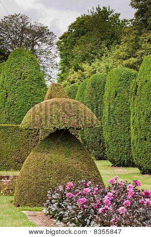 Topiary In The Garden