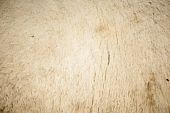 a camel skin was photographed in makro detail poster