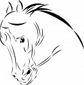 Vector illustration tattoo style sketch  horse head. poster