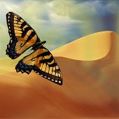 Beautiful butterfly design with sand dunes in the background poster