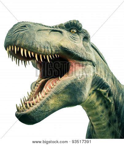 Head Ancient Dinosaur Tyrannosaurus