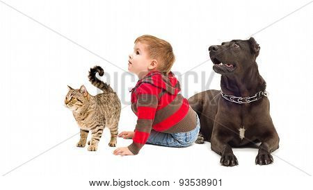 Curious boy, dog and a cat