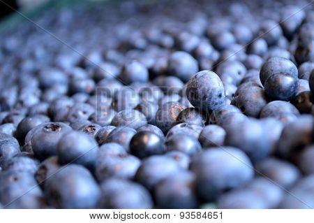 Mountain Of Organic Blueberries