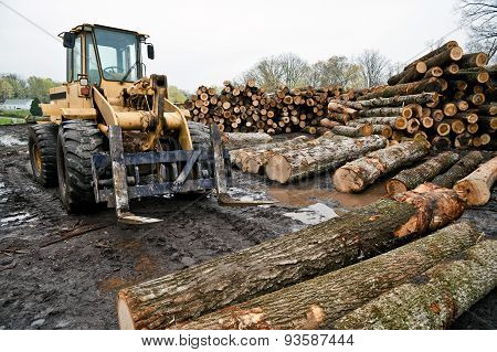 Logs With Forklift in Lumber Area