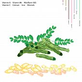Healthcare Concept Illustration of Moringa Pods with Vitamin A Vitamin B6 Riboflavin or B2 Vitamin C Calcium Iron Minerals Essential Nutrient for Life.. poster