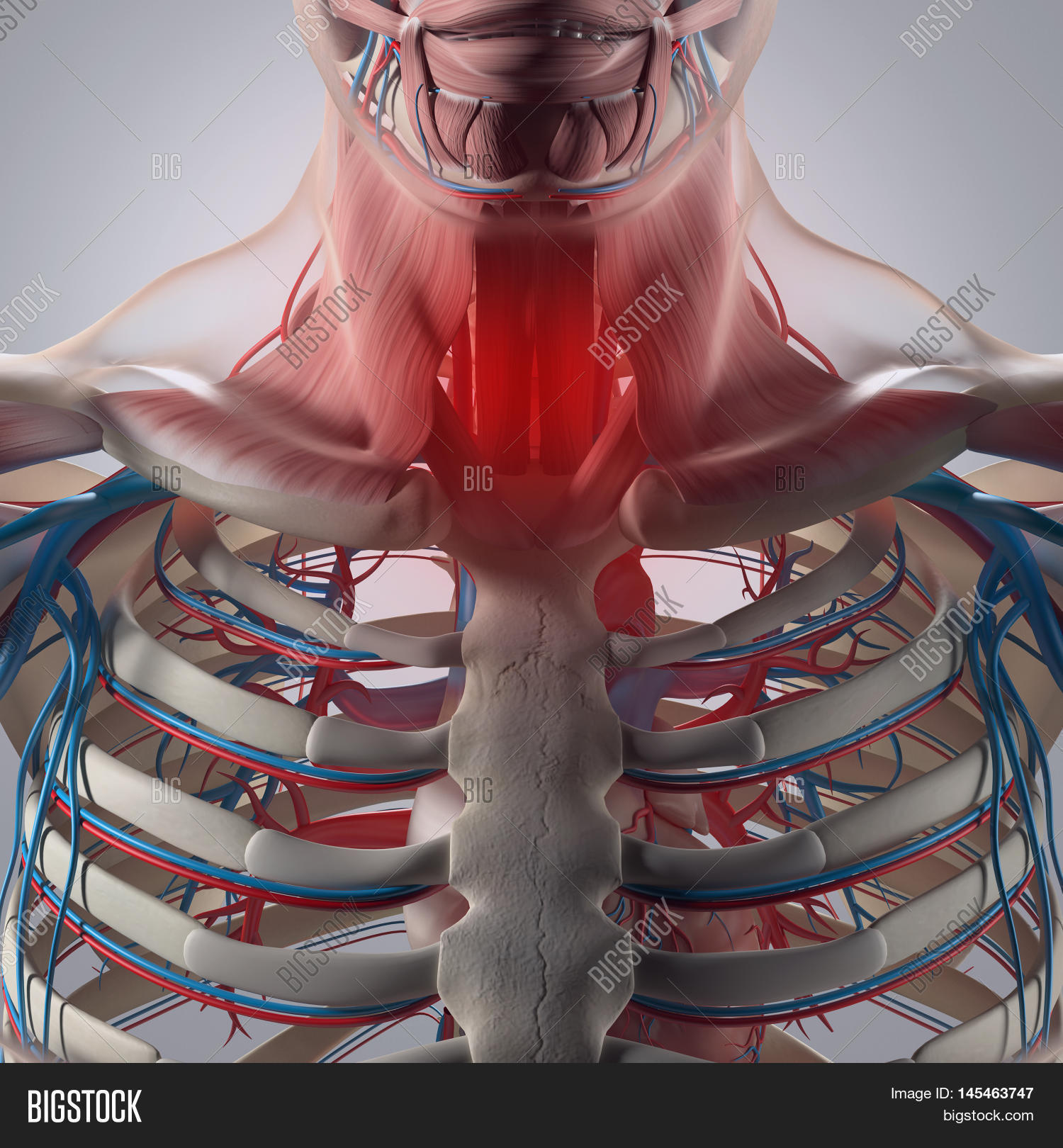 Human Anatomy,sore Image & Photo (Free Trial) | Bigstock