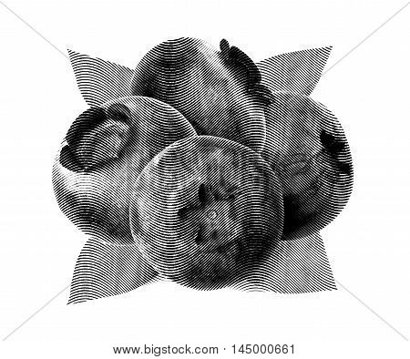 Juicy and fresh blueberries with green leaves on white background. Blue color blueberries close-up. Image of blueberries with high resolution. Drawing sketch painting blueberry