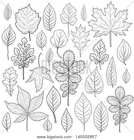 Leaves silhouette set vector. Coloring book page for adult