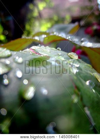 close up of water proplets on leaves