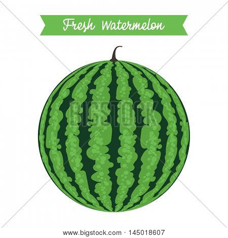 Round Watermelon. Fresh Watermelon. Vector graphics