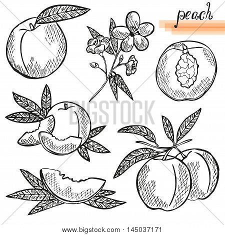 Peach Fruits Set