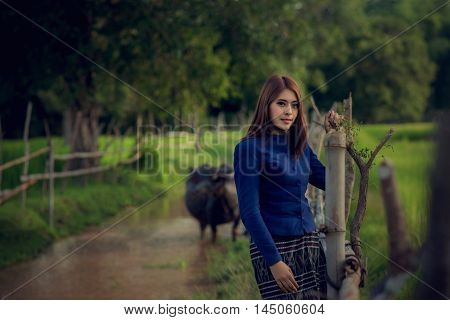Thai woman wearing typical Thai dress on Rice fields Buffalo River background identity culture of Thailand