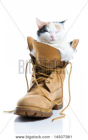 Adorable little kitten sleeping inside a boot isolated on white background
