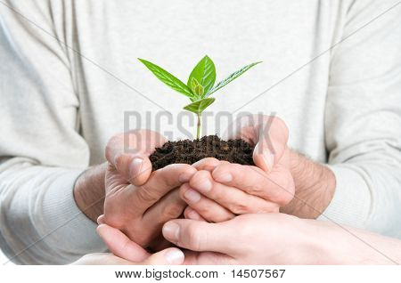 Group of hands holding a fresh green sprout, symbol of growing business, environmental conservation and bank savings.