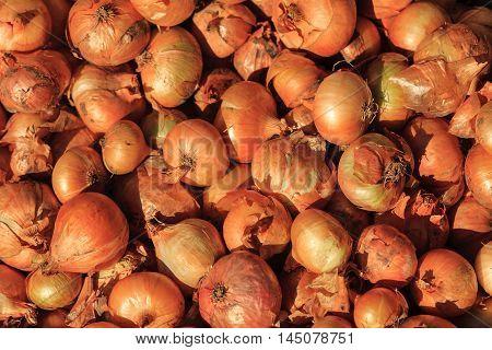 dry onion photo, raw onion, vegetable photo, organic onion, onion background