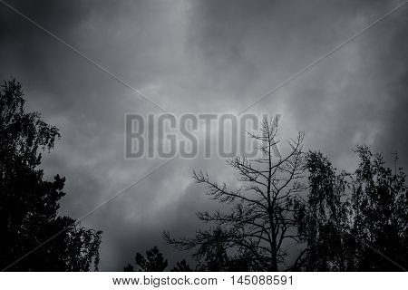 Natural background of sky with dark thunderclouds and black silhouettes of trees