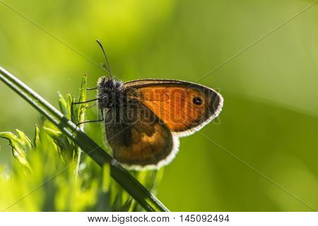 Butterfly Wildlife Insect Landscape Summer Sunlight Impression