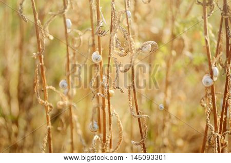 Wild meadow grass under morning sunlight. Autumn field with p small snails background. Sunny seasonal backdrop for your design