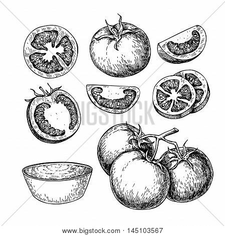 Tomato vector drawing set. Isolated tomato sliced piece and tomato sauce. Vegetable engraved style illustration. Detailed vegetarian food sketch. Farm market product.
