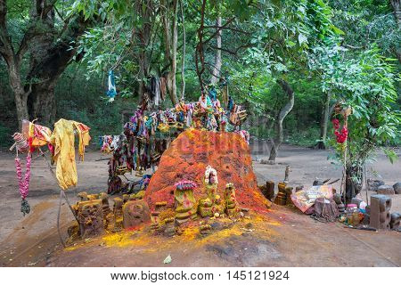 Madurai India - October 19 2013: Tree holding donations with fertility meaning stands behind old colorful Snake hill shrine to Manasa the snake goddess. In front of Pazhamudircholai temple.