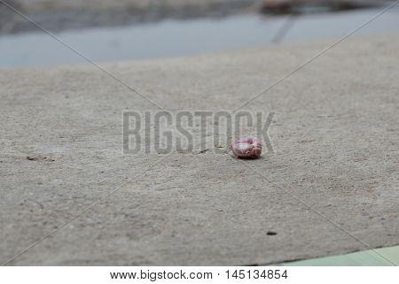 gum scrap on cement ground on street