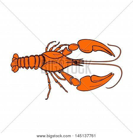 vector illustration of orange cancer. Illustration of orange craw fish on white background. Zodiac signs cancer