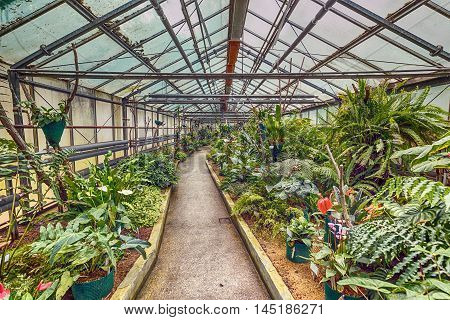 Interior botanic glasshouse building greenhouse complex, botanical garden