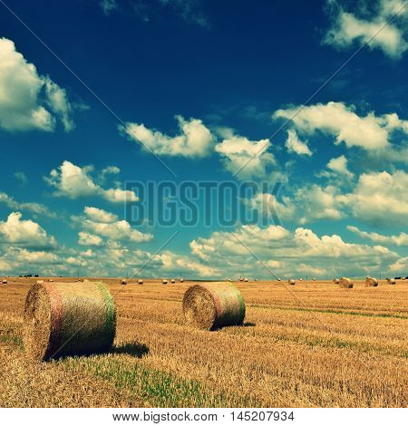 Hay bail harvesting in golden field landscape. Summer Farm Scenery with Haystack