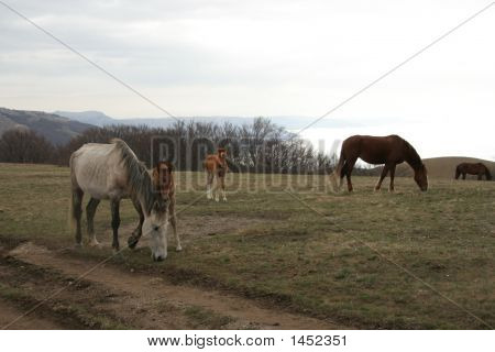 Horses Grazing Near The End Of Earth