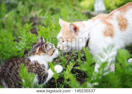 Meeting a large cat and the little kitten in the garden