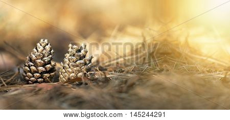 Website banner of Christmas pine cones in the forest