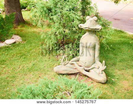 Frog Yoga Meditating Sitting On  Green Grass.