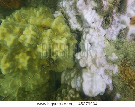 Massive coral bleaching and warmer sea temperature, low key photo