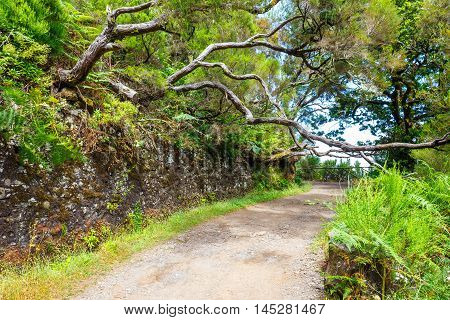 Laurel Forest And Irrigation Canal. Lewada Das 25 Fontes And Lewada Do Risco , Madeira Island, Portu