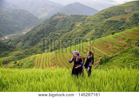 woman farmer carry basket on shoulder work on rice terrace with her daughter use phone