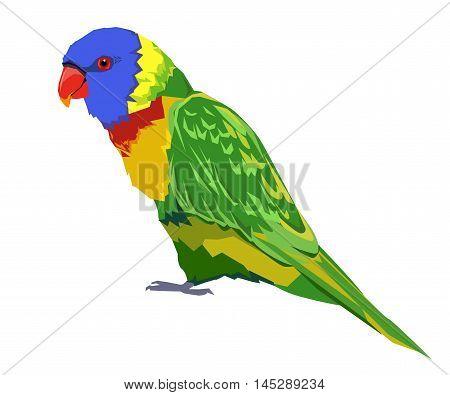 bird vector, parrot vector, rainbow lorikeet vector bird