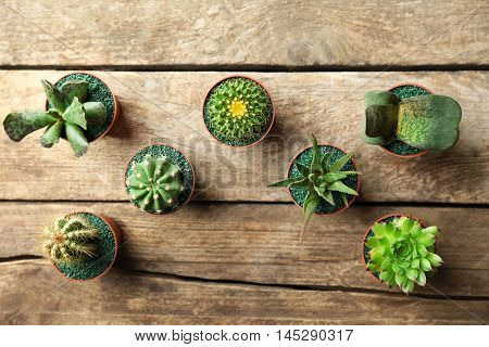 Cacti and succulents in pots on wooden background, top view