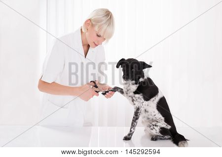 Young Female Vet Trimming Dog's Toenail In Clinic