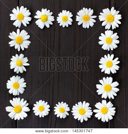 flat lay frame of chamomile flowers on a dark wooden background / unfilled daisy frame