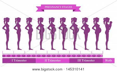 Vector illustration of pregnant female silhouettes. Changes in a woman's body in pregnancy. Pregnancy stages trimesters and birth pregnant woman and baby. Infographic elements